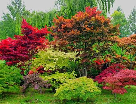 посадка деревьев на участке осенью